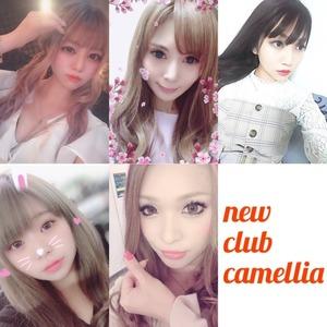 New Club Camellia